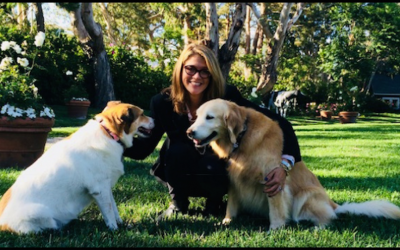 Happy the Golden Jam Spreads Compassion and Medical Care to Shelter Dogs
